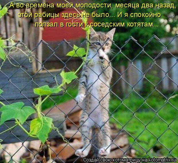 kotomatritsa_-M (600x548, 348Kb)