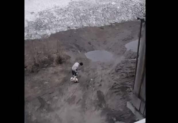 В Воркуте после избиения щенка полиция начала проверку