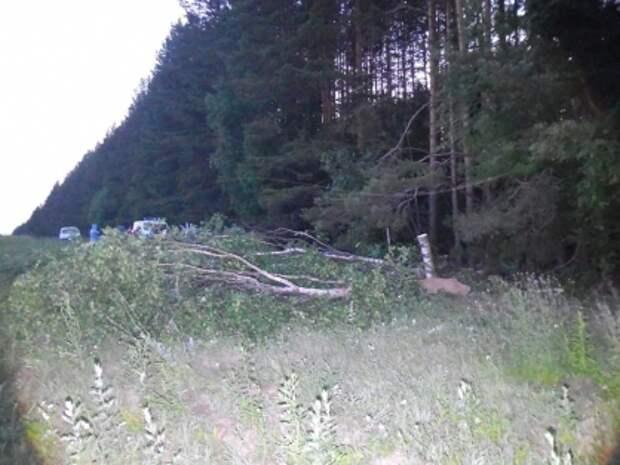 Жительницу Ижевска насмерть придавило срубленным деревом