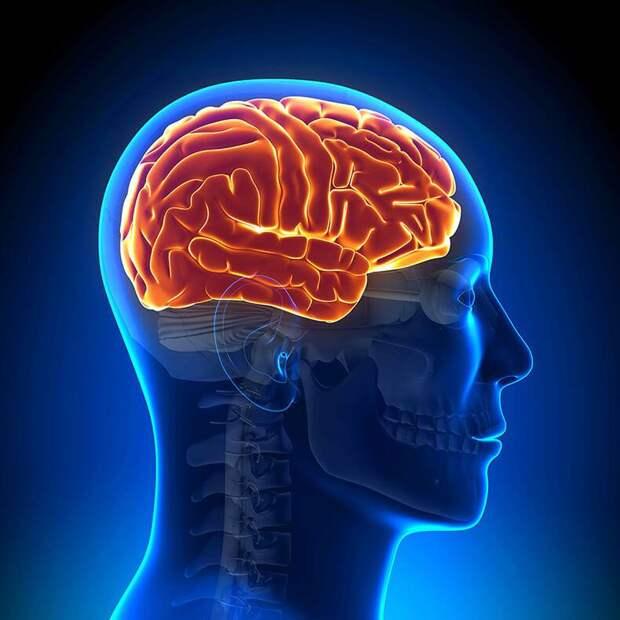 Трапецевидная мышца: Врата мозга