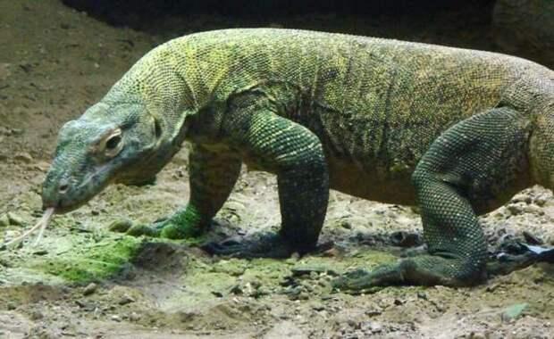 Самые опасные животные планеты (9 фото)
