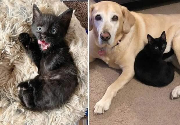 История котика Мишки, который очень хотел жить и любить