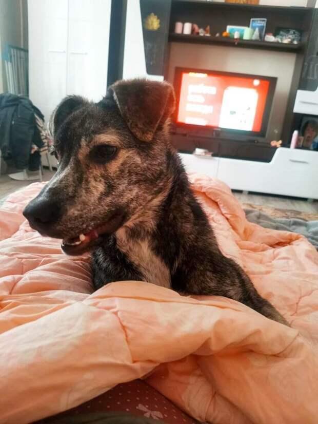 «Не красивая» мраморная собачка чудом нашла дом
