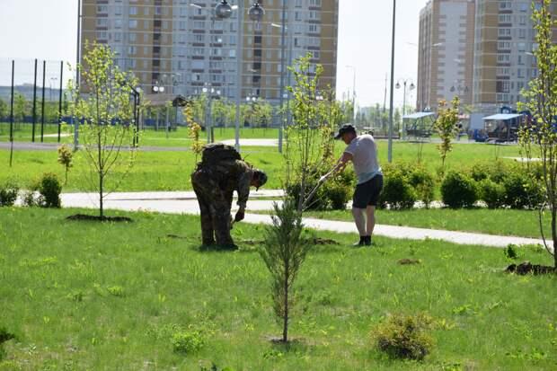 В Олимпийском парке в Тамбове высадили цветущие магнолии