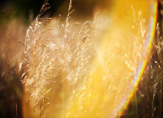 Аллергия на солнце: симптомы и лечение