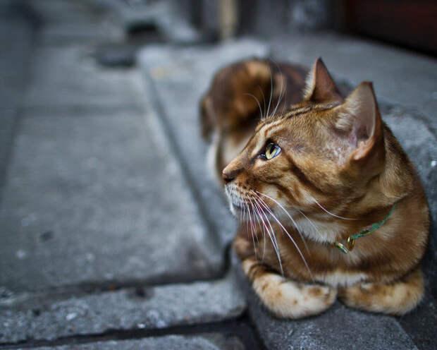 Фото Яндекс Картинки