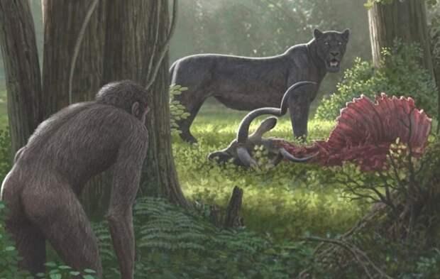 Древние предки людей примерно 4-3,5 млн лет назад стали добывать еду клептопаразитизмом / Фото: twitter.com