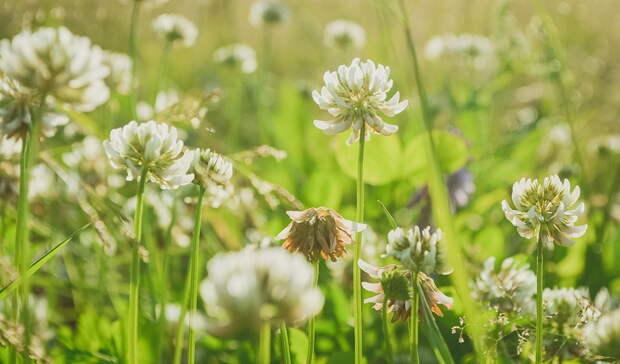 Вдополнительное озеленение наулице Щорса вБелгороде «вольют» ещё 13,6млн ...