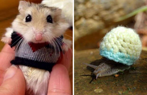 Эти 20 фотографий безумно милых животных всвитерах согреют вас