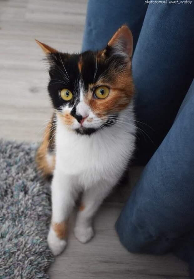 В надежде на спасение испуганный котенок бросился обнимать ноги людей