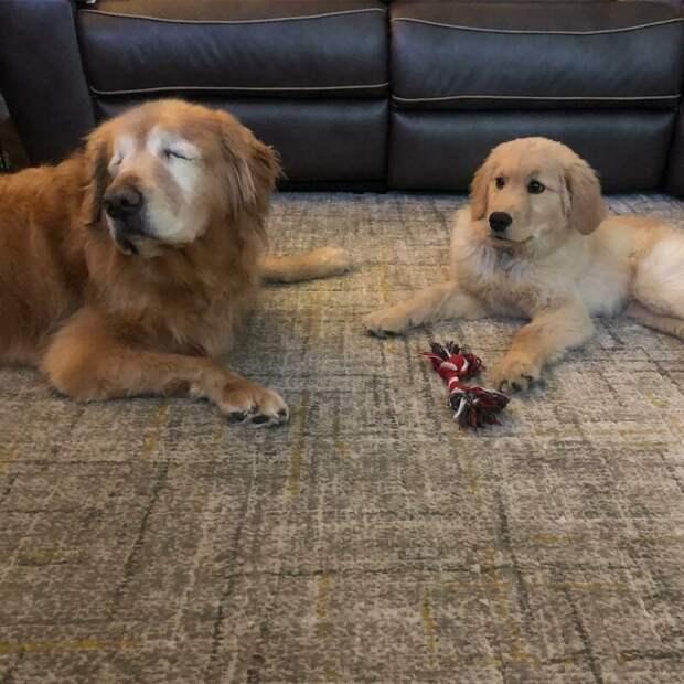 У собачьего дуэта также есть свой Instagram, если вы вдруг хотите следить за их очаровательной дружбой добро, друзья, животные, зрение, история, милота, собака