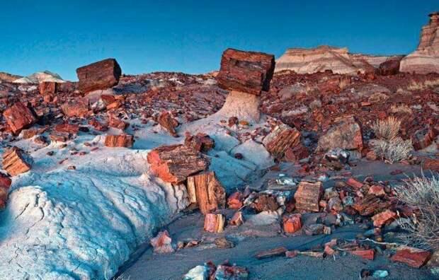Национальный парк Петрифайд-Форест — один из национальных парков США. Расположен в штате Аризона, между городами Навахо и Холбрук. Представляет собой одно из самых крупных мест нахождения окаменелых деревьев завораживающе, земля, интересное, красота, пейзажи, природа, фотомир