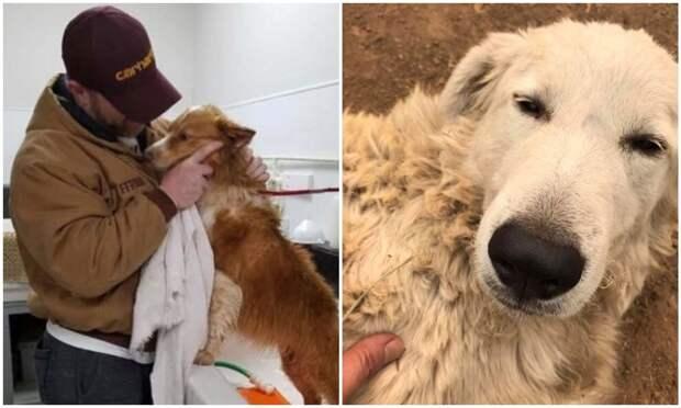 Не теряйте веру: 20+ трогательных случаев, когда вернулись пропавшие собаки