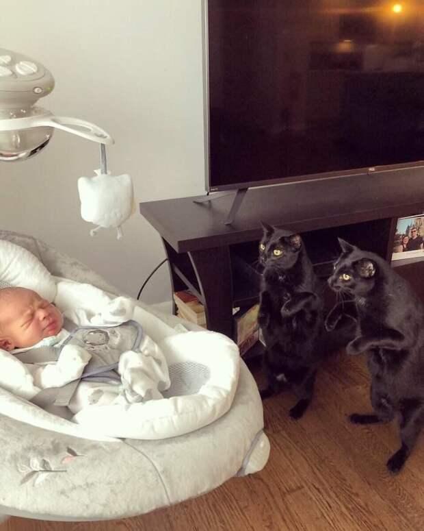 Кто там такой? животные, коты, смешные картинки, юмор