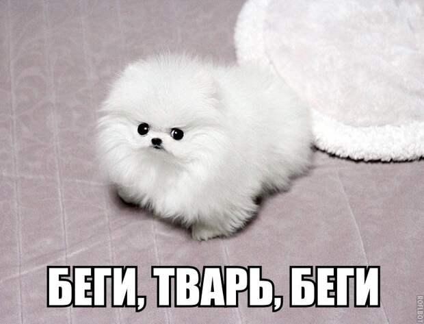 1453387509_memy-s-zhivotnymi-8