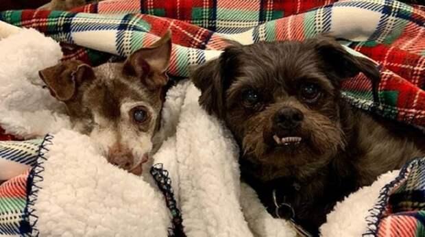 Старые собачки грустили в одиночестве, но вскоре их полюбила одна семья