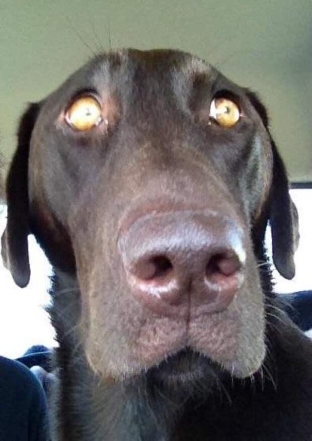 Собаки, которые поняли, что их везут к ветеринару