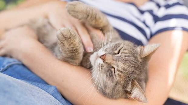 Друг человека: самые дружелюбные породы кошек назвали эксперты