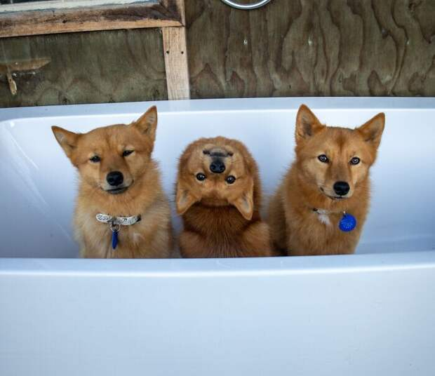 Увсех есть такой друг: собака «портит» каждую фотографию ссородичами