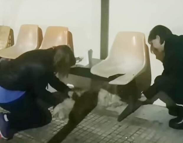 Две собачки со спутанной шерстью лежали на улице под старыми стульями