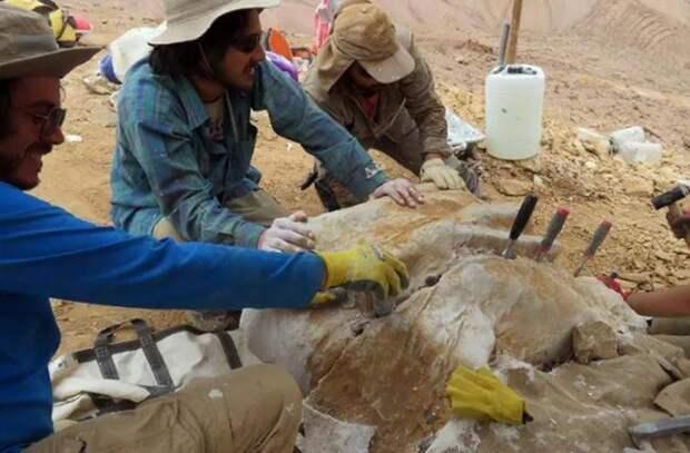 В пустыне Атакама нашли останки ранее неизвестного науке динозавра