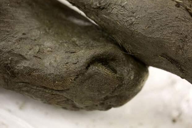 Ученые из России и Кореи планируют клонировать доисторическую лошадь