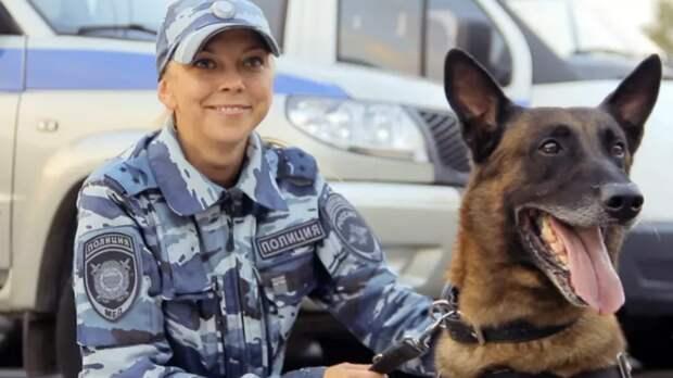 Ростовскую область заполонят собаки, которые небоятся выстрелов