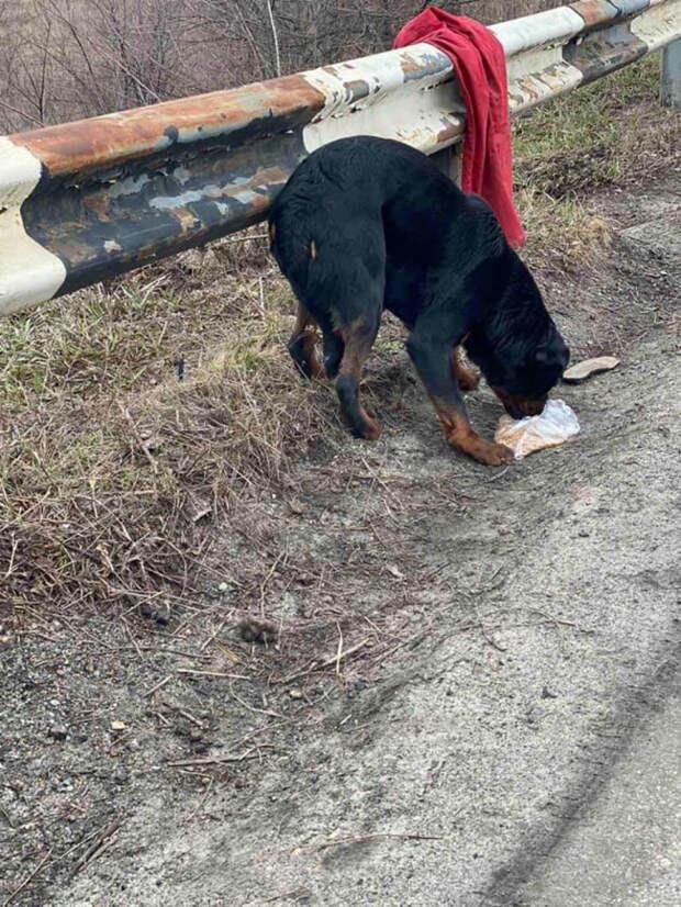 На трассе собака охраняла тряпку, вместе с которой ее выкинули