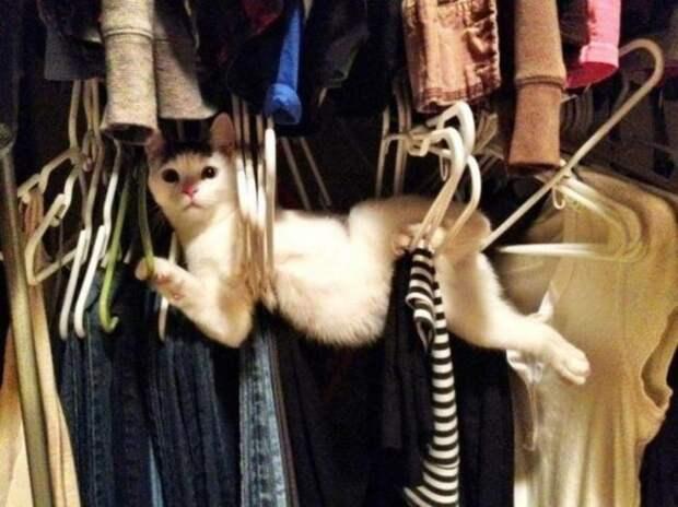 11 смешных фото животных, которых поймали на месте преступления