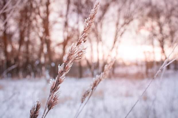 Итоги дня: солнечные выходные в Удмуртии, уход замминистра здравоохранения и планы на Новый год