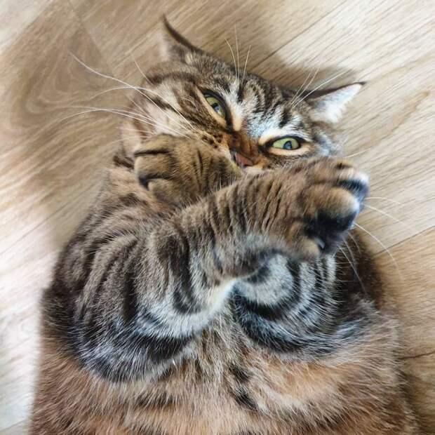 Подписчики узнают себя в этих комичных фото толстой кошки instagram, кот, полосатый кот, прикол, смешно, толстый кот, юмор