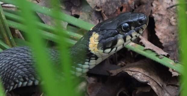 Чёрных змей заметили на Яузе