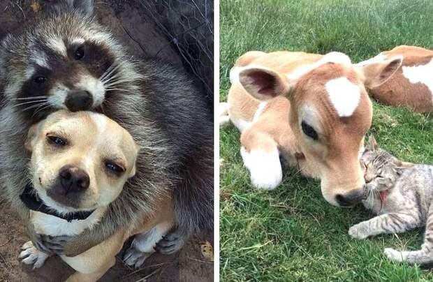 15 очаровательных случаев, когда коты и собаки заводили дружбу с дикими животными