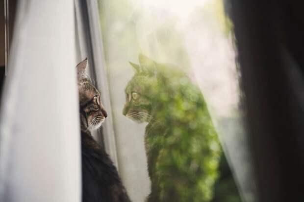 7239160-R3L8T8D-650-cat-waiting-window-43