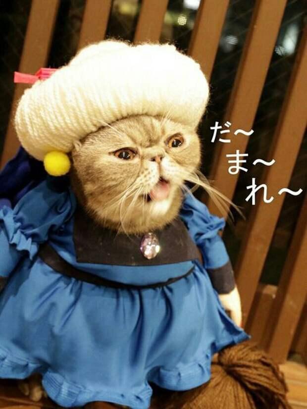 Миядзаки: коты редкой породы