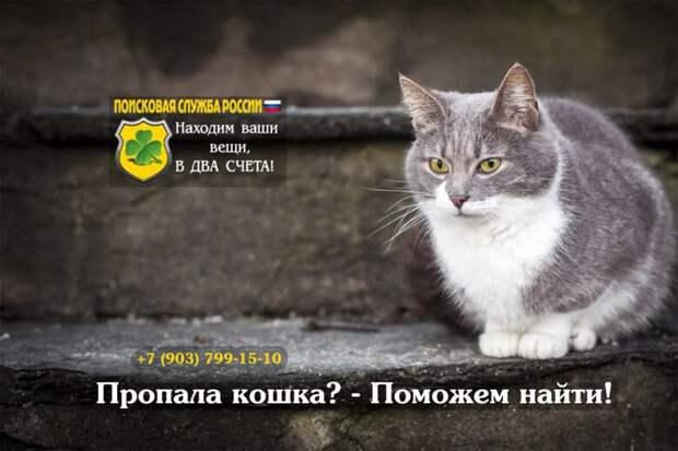 Как найти кошку, убежавшую из дома самостоятельно или с профессионалами
