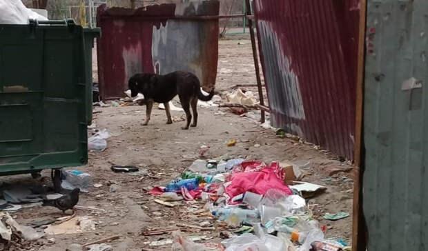 «Мы же не на Луне живём»: в Волгограде жильцы делят общежитие с крысами и бомжами