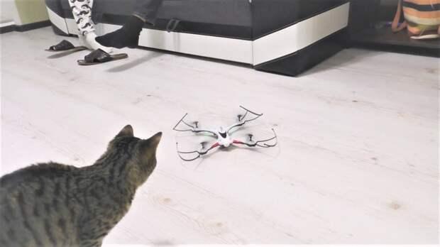 Прикольные коты и кошки Любопытство Шторы Дроны и Большая Змея