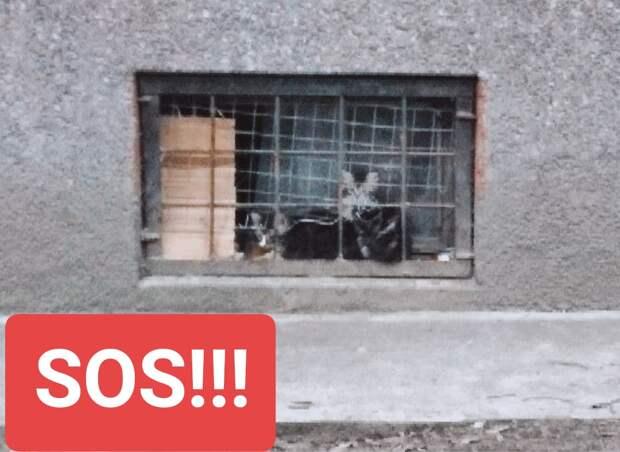 Помогите спасите! Сантехник, который обслуживает этот дом, ненавидит кошек и людей, которые им помогают. Известно, что маленьких котят с их мамой он заливал кипятком.