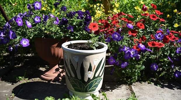 Что нужно обязательно сделать в июле с контейнерными цветами, чтобы они шикарно цвели до осени