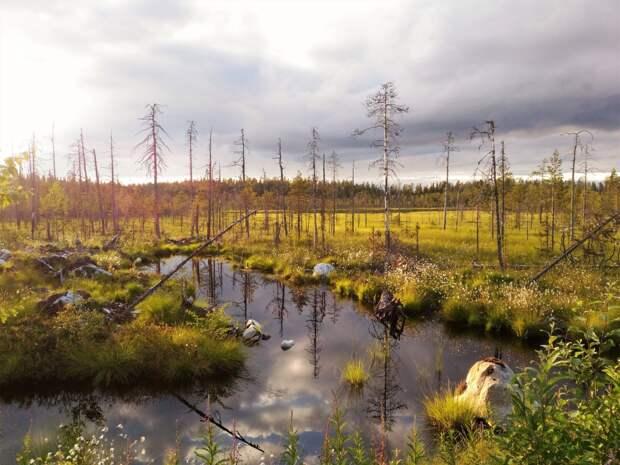 6 фактов о карельских болотах