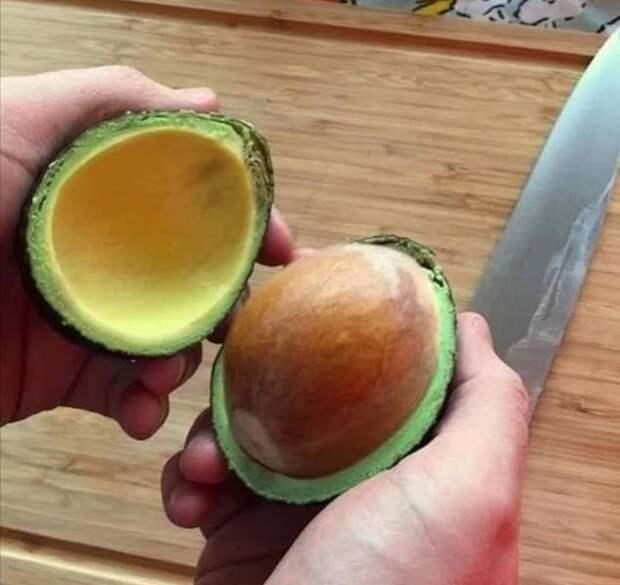 Огромная косточка авокадо