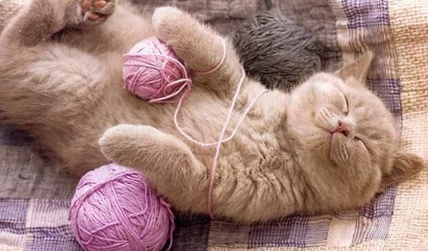 Кошки - поглотители и нейтрализаторы негативной энергии