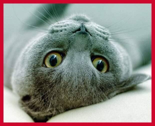 20 самых милых пород кошек