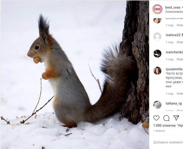 В Лианозовском парке замечена белка, которая любит фотосессии