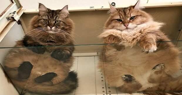 Пятки, пузики и шерсть: убойная доза милоты — котики на стекле, вид снизу история, кошки, милота, фотографии
