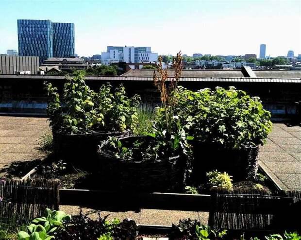 Солнечные батареи на крыше против крышных огородов