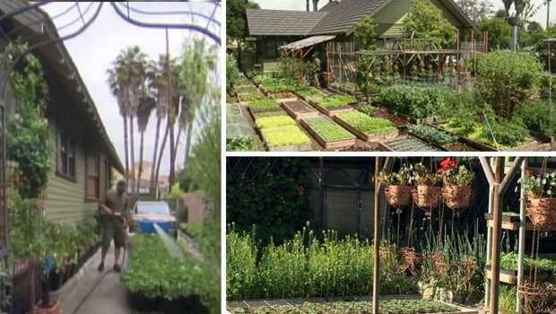 На шести сотках фермер выращивает грандиозные урожаи: кормит всю семью и еще на продажу остается