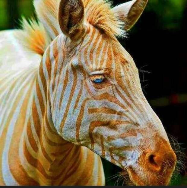 источник https://i.pinimg.com/736x/74/08/80/74088071f769cc92dbea26fc203ba7ef--gold-stripes-the-stripes.jpg