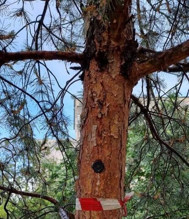 В парке «Ангарские пруды» с деревьев сняли «черные метки»